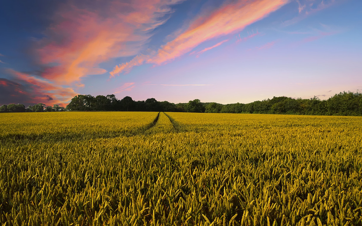 General Mills joins farmers to advance regenerative agriculture