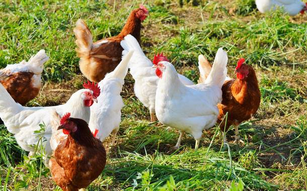 Tyson Foods begins construction of $300m poultry plant