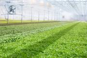 Indoor farming start-up BrightFarms raises $100m in funding