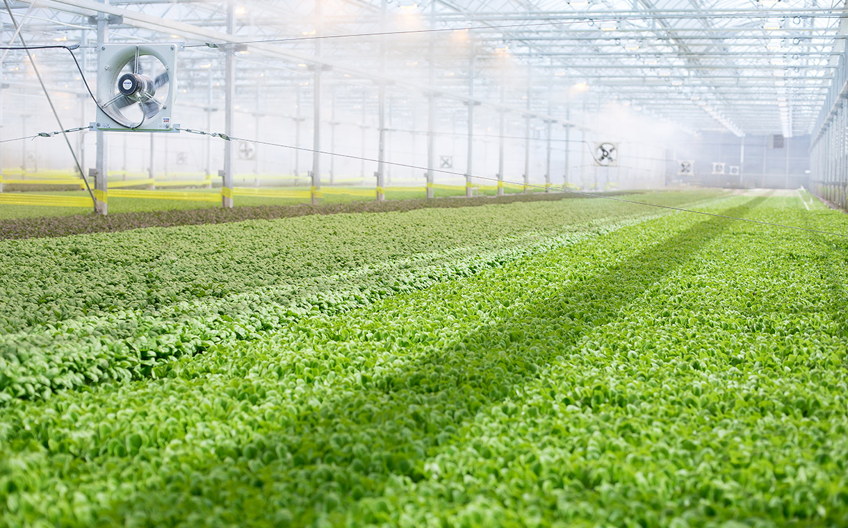 Greenhouse farming start-up BrightFarms secures $55m