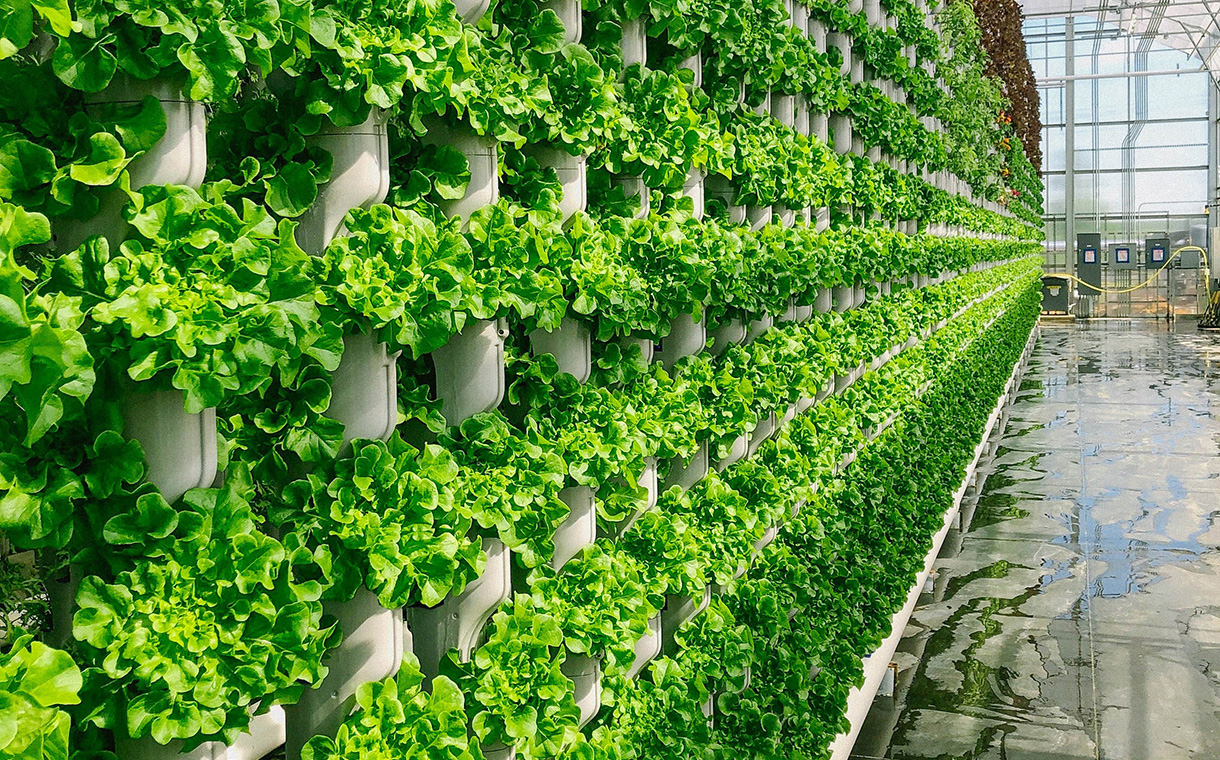 Eden Green Technology debuts new vertically farmed produce