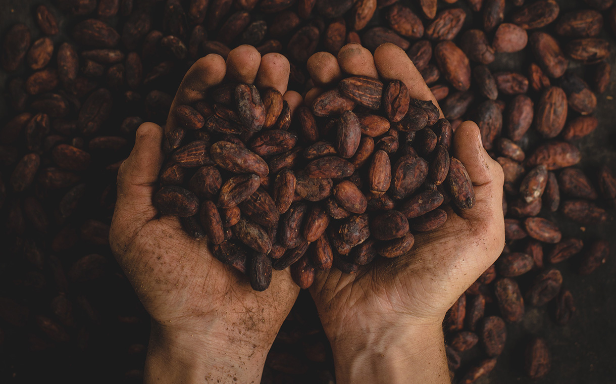 Colombia targets deforestation-free cocoa production by 2020