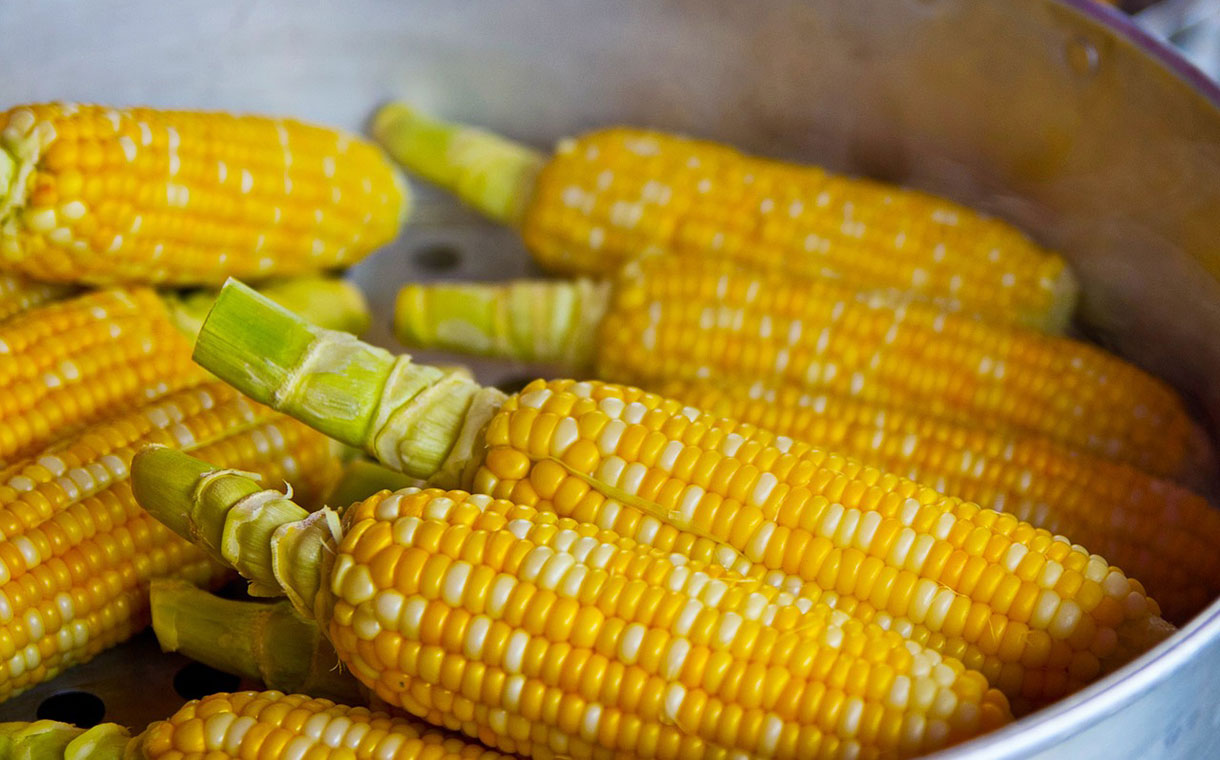 Dacsa Bunge Ukraine to build $14m corn processing plant