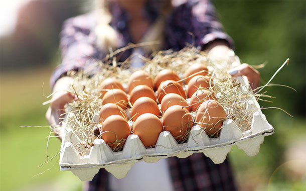 Orkla Foods Norge plans shift to free-range eggs in its products