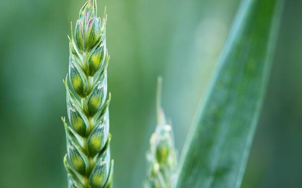 Olam awards $75,000 grant to support food security research