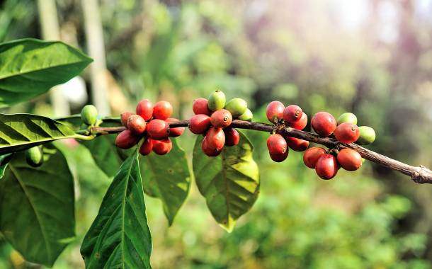 Nespresso joins effort to revive Puerto Rico's coffee industry
