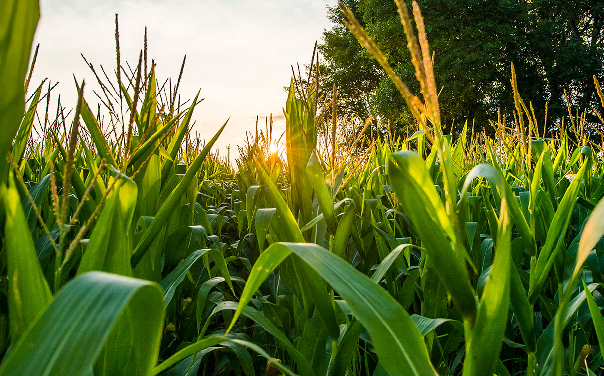 Cargill launches new starch sustainability programme