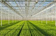 Chr. Hansen part of sustainable agriculture project in Denmark