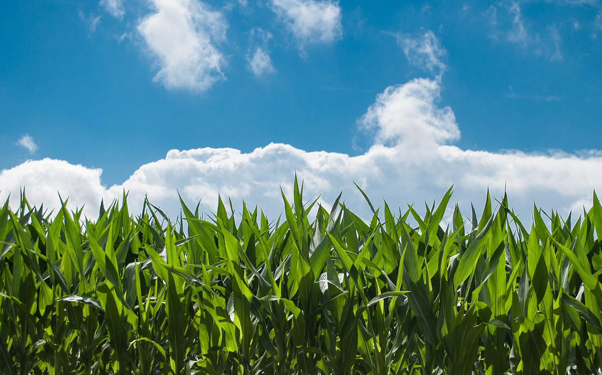 Land O'Lakes Sustain and Tate & Lyle reveal sustainability tie-up