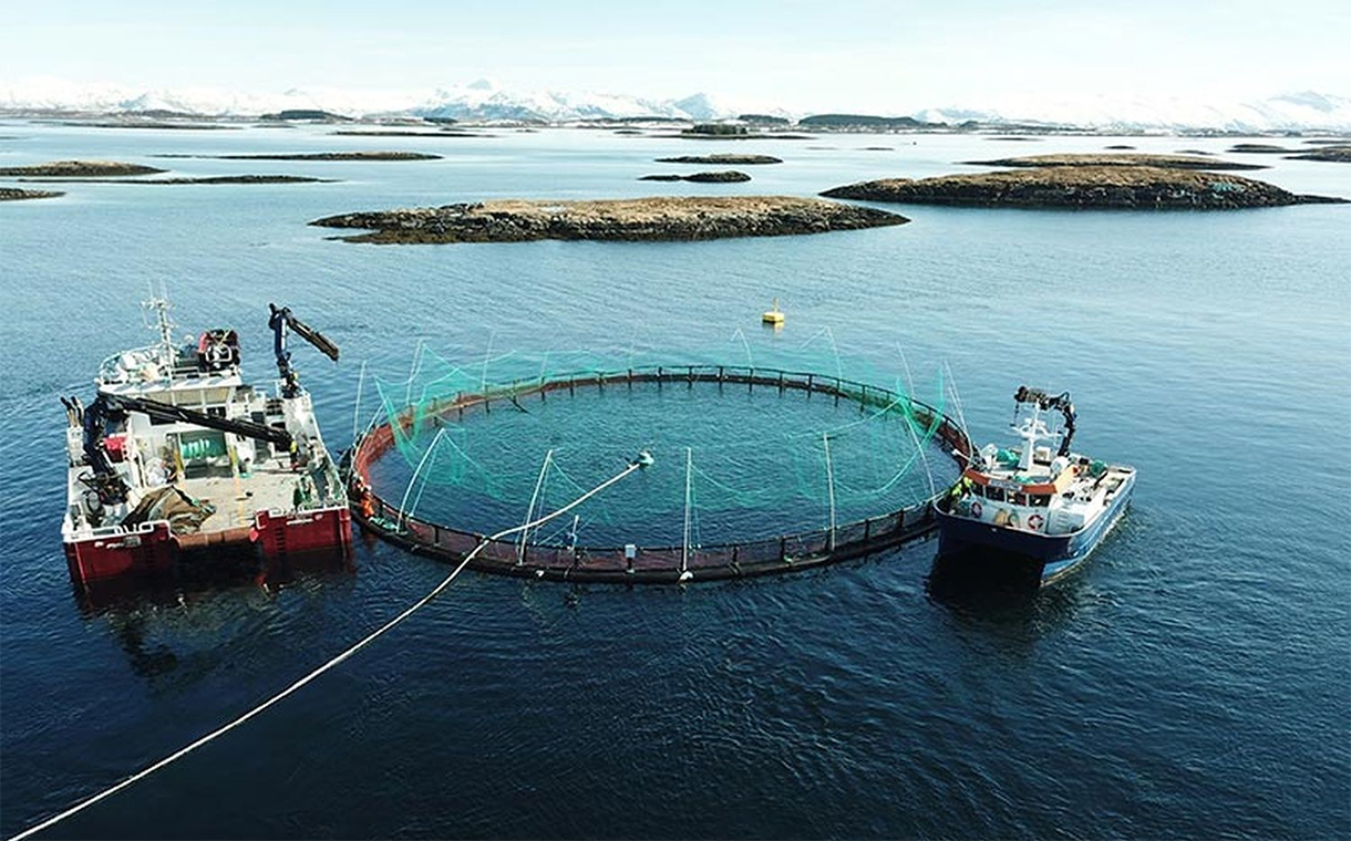 Marine Harvest plans to change its name to Mowi as of next year
