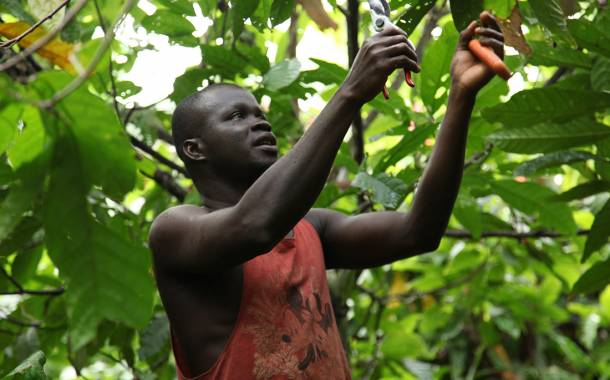 Barry Callebaut raises game on sustainable cocoa, report says