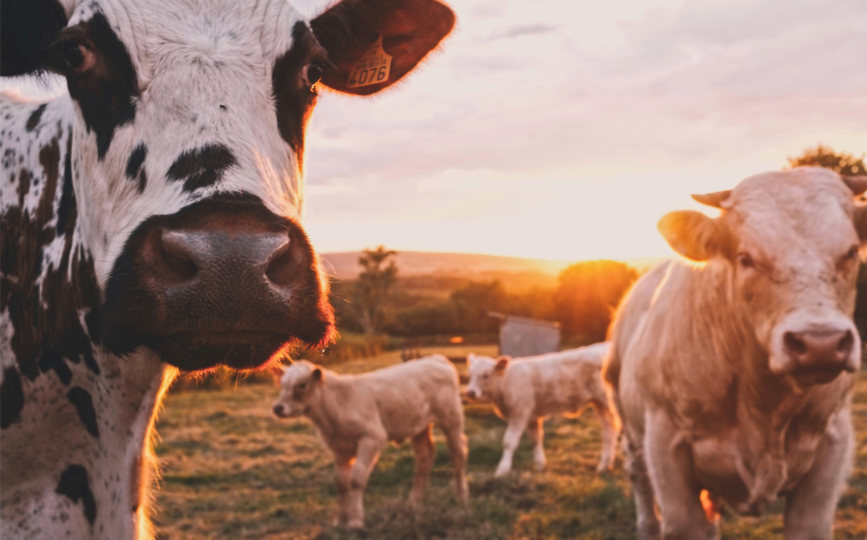 Report shows a reduction of CO2 emissions in the dairy industry