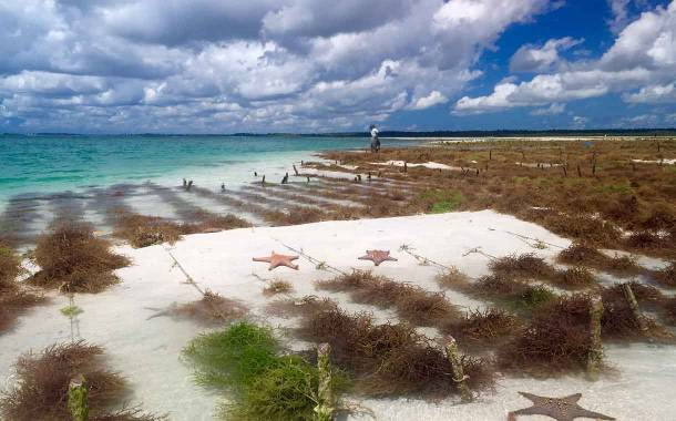 Cargill targets sustainable red seaweed through new initiative