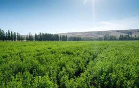 Tyte & Lyle joins Earthwatch to research sustainability of stevia