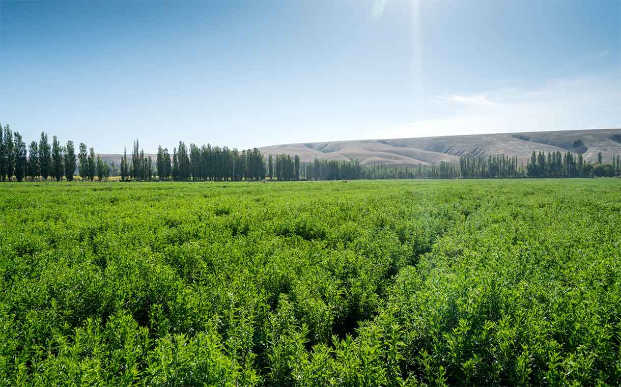 Tate & Lyle joins Earthwatch to research sustainability of stevia