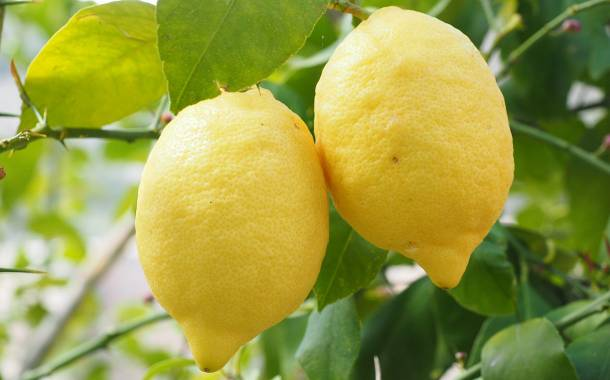Limoneira enters Argentinian market through new joint venture