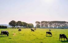 SomaDetect raises $2m for dairy management software