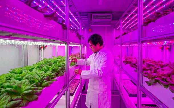 UK scientists develop 'container farms' to produce bigger crops