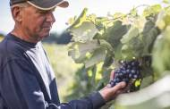 Welch's in partnership to develop neutralised Concord grape juice