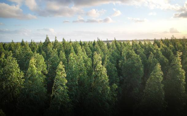 Nestlé: 77% of its agricultural commodities 'deforestation-free'