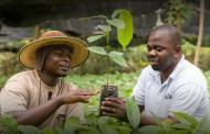 Cargill invests $125m in cocoa production and sustainability
