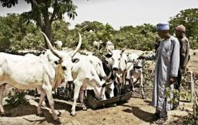 Arla commits to developing sustainable Nigerian dairy sector