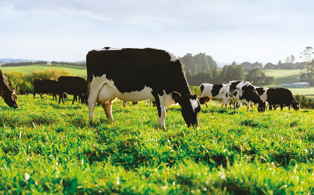 Digital dairy project receives £50k in funding from UK government