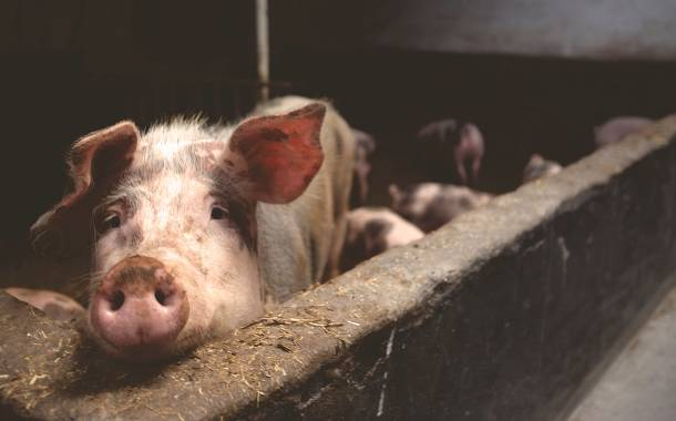 Tyson bans ractopamine use in pork to meet global demand