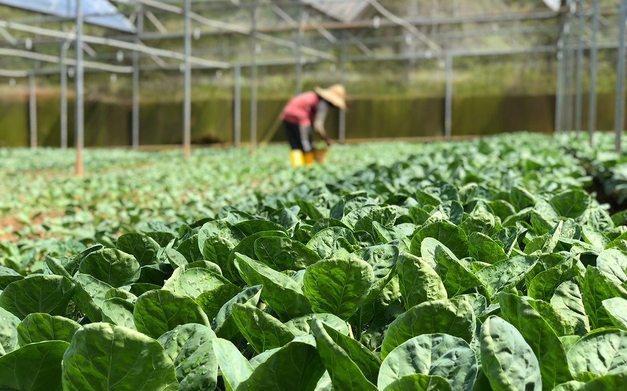 European Commission allocates 200m euro to support EU agri-food products