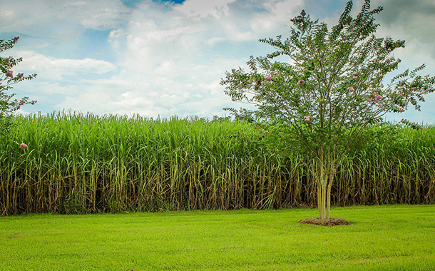 Tetra Pak first to offer certified sustainable sugarcane packaging