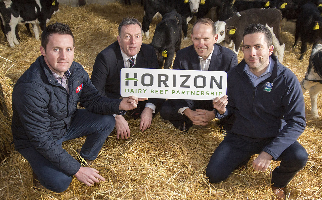 Dale Farm and ABP partner for sustainable NI dairy beef market