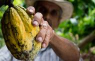 Mars teams with NSIP for 100% sustainable cacao supply chain