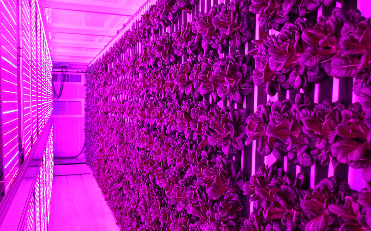 Freight Farms and Sodexo bring vertical farming to universities