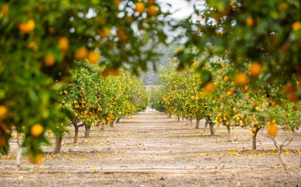 Givaudan creates VR tool for citrus beverage applications
