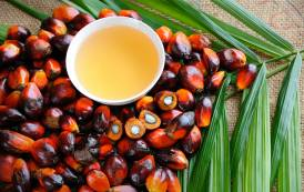 Cargill to invest $20m to upgrade palm oil facility