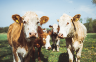 Five key technology innovations in the dairy industry for 2020