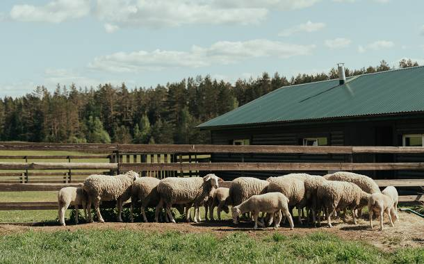 Sheep ranchers dispute JBS plant takeover deal in Colorado