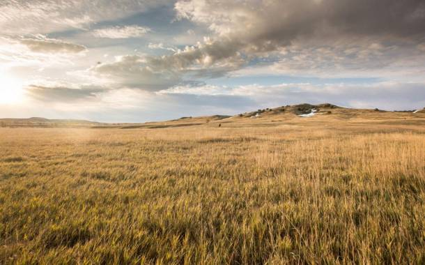 Walmart, Cargill and McDonald's partner in WWF-led initiative to restore grasslands
