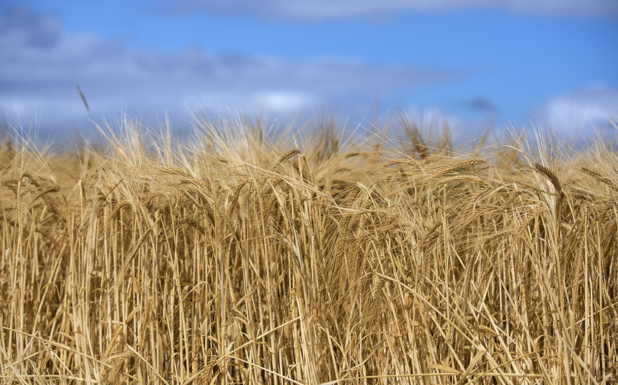 AB InBev trials blockchain to track and trace barley supply chain