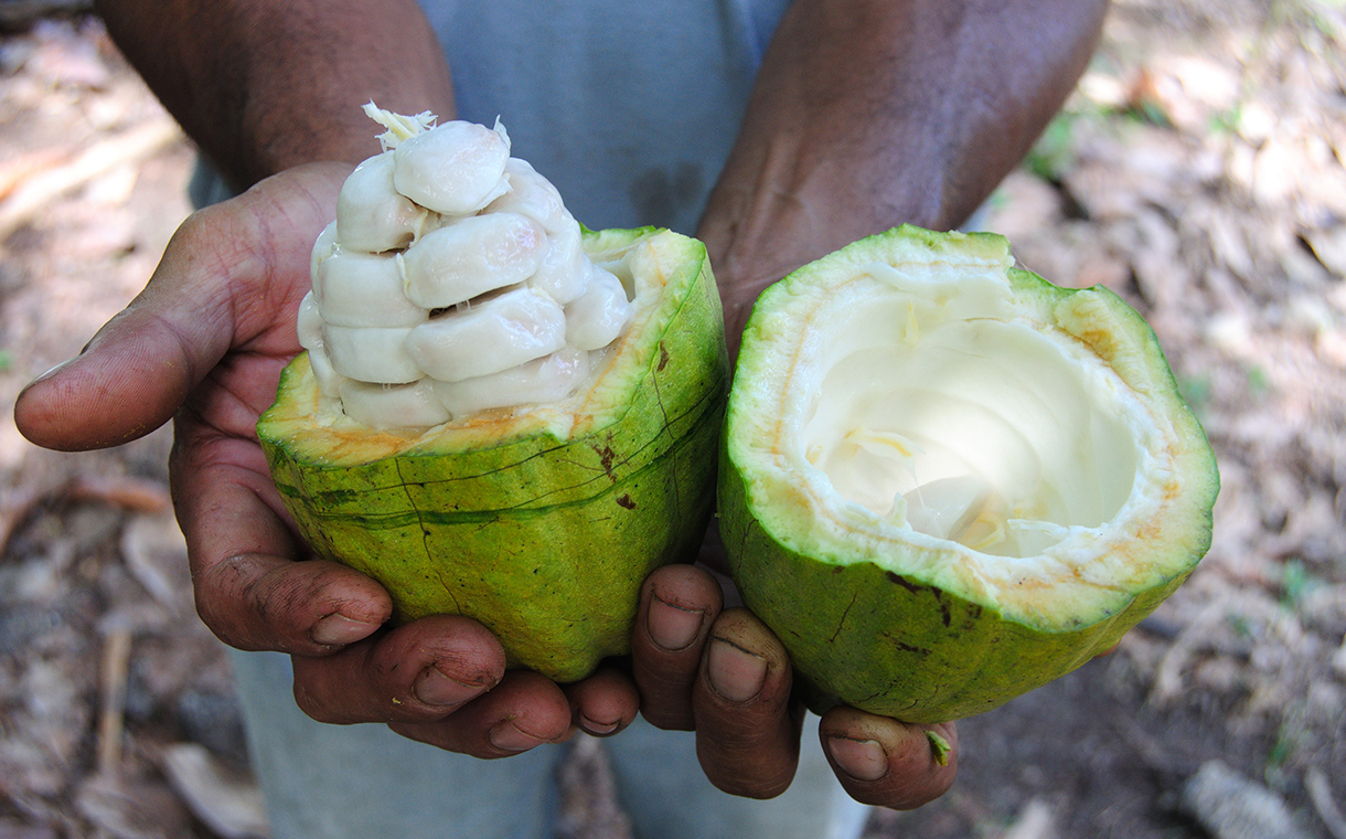 Barry Callebaut launches Cabosse Naturals cacao fruit brand