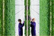 Vertical farming company Plenty secures $140m in funding