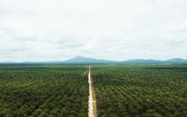 Cargill ramps up supply of segregated sustainable palm oil in North America