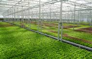 Urban agriculture firm Gotham Greens raises $87m in financing
