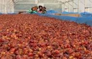 Olam Coffee creates novel superfruit from upcycled cascara