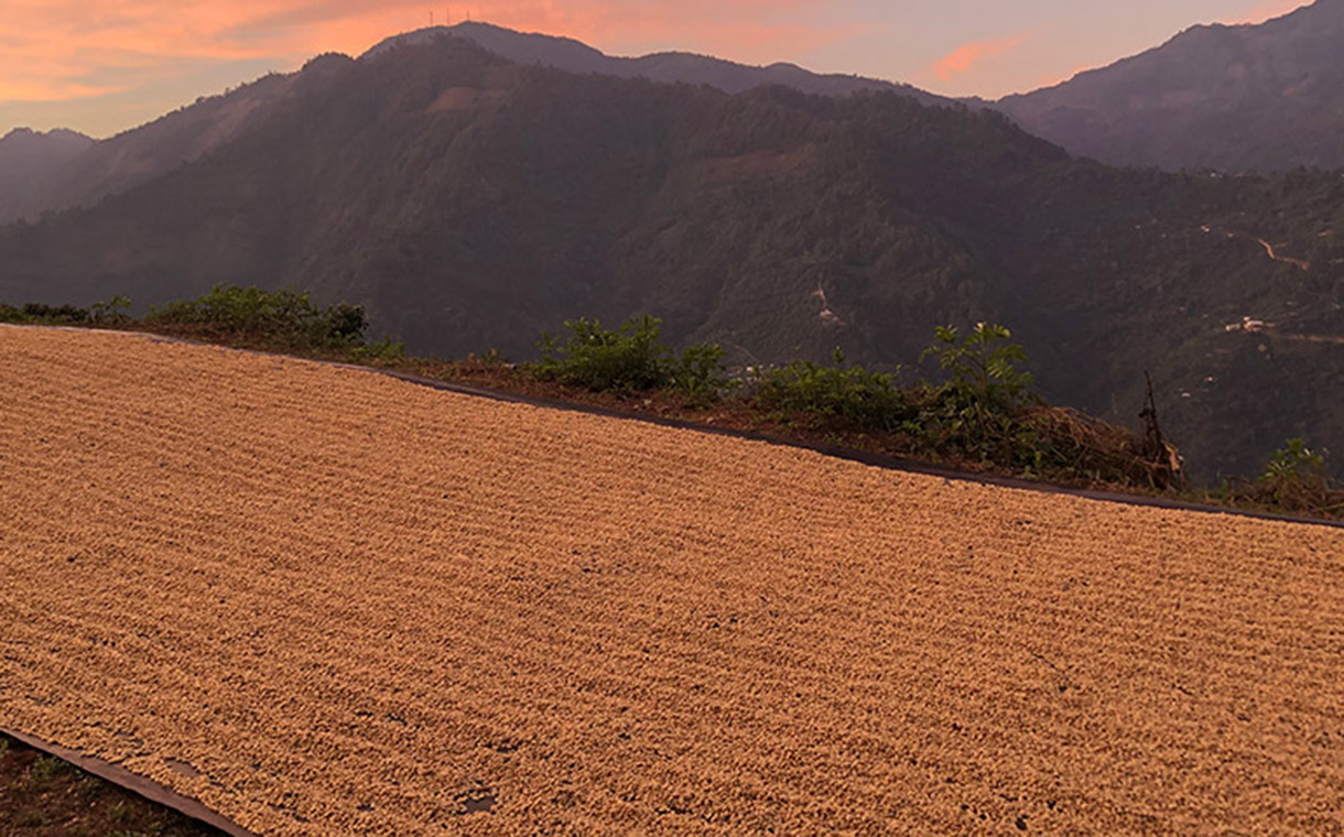 Olam and TechnoServe partner to support Guatemala coffee farmers