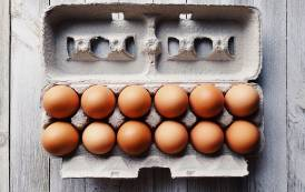 Cal-Maine Foods to expand cage-free egg production in Florida