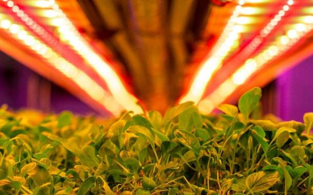 Vertical Future in partnership for Middle East rollout of vertical farming system