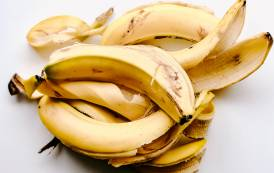 Fooditive and Frutco join forces on 'sustainable' banana sweetener