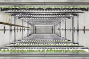 Infarm unveils new automated growing centre with higher-yield capabilities
