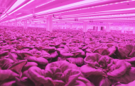 Kalera acquires customised seed developer Vindara for vertical farming